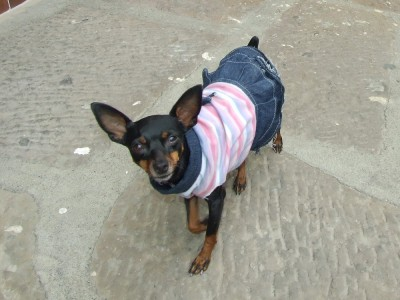 Posing-Hund San Gil