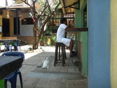 """Auch Katzen haben Hunger im """"Casa de Felipe"""" Taganga"""