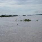 Szene auf dem Amazonas bei Santa Rosa Peru