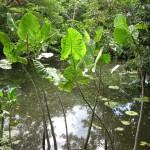 Am Ufer des Amazonas in Kolumbien bei Leticia